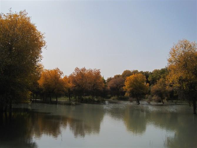 农村丰收的画 农村画秋天丰收的图画 农村秋天丰收的画大全